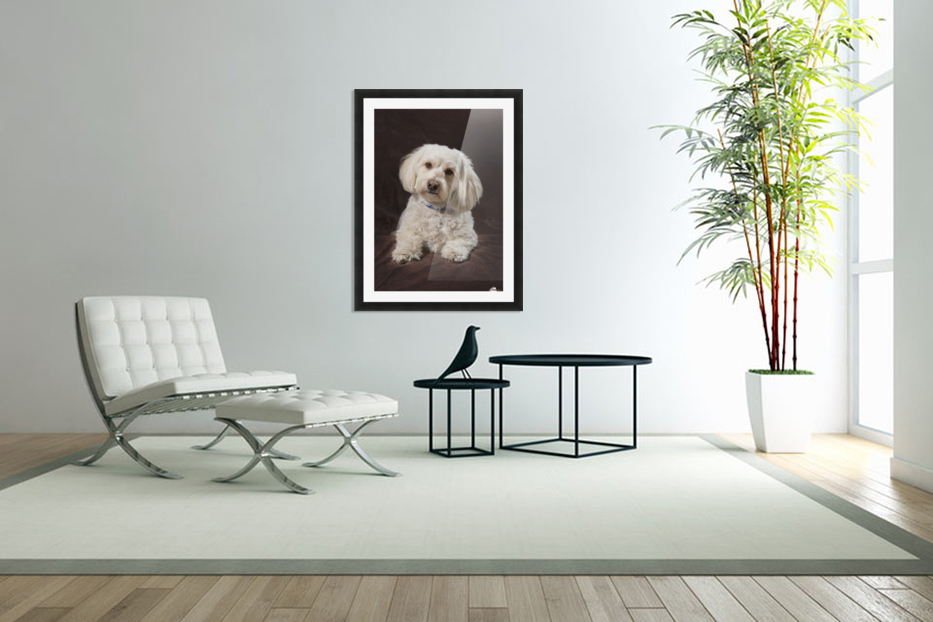 Shih Tzu-Poodle On A Brown Muslin Backdrop in Custom Picture Frame