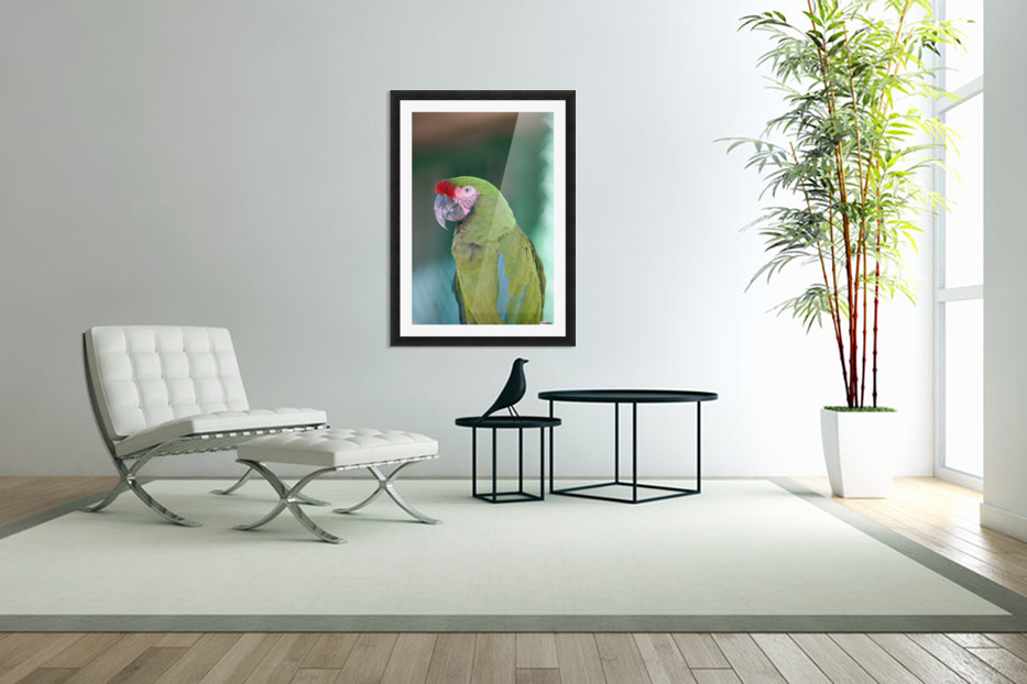Close up of a parrot;Puerto vallarta mexico in Custom Picture Frame
