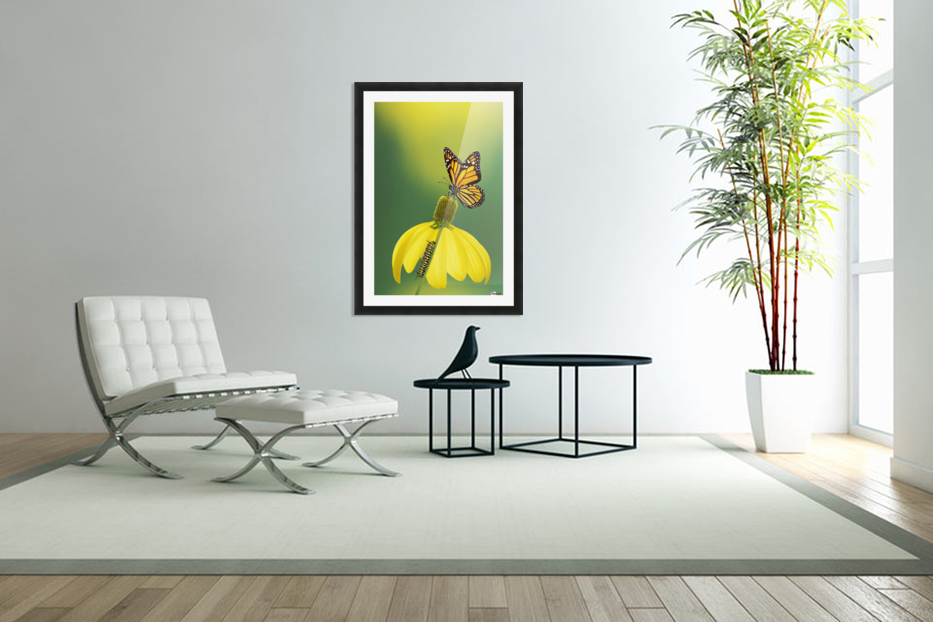 Caterpillar to butterfly;British columbia canada in Custom Picture Frame