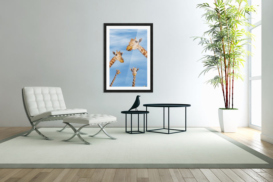 Four giraffes looking downward;Africa in Custom Picture Frame