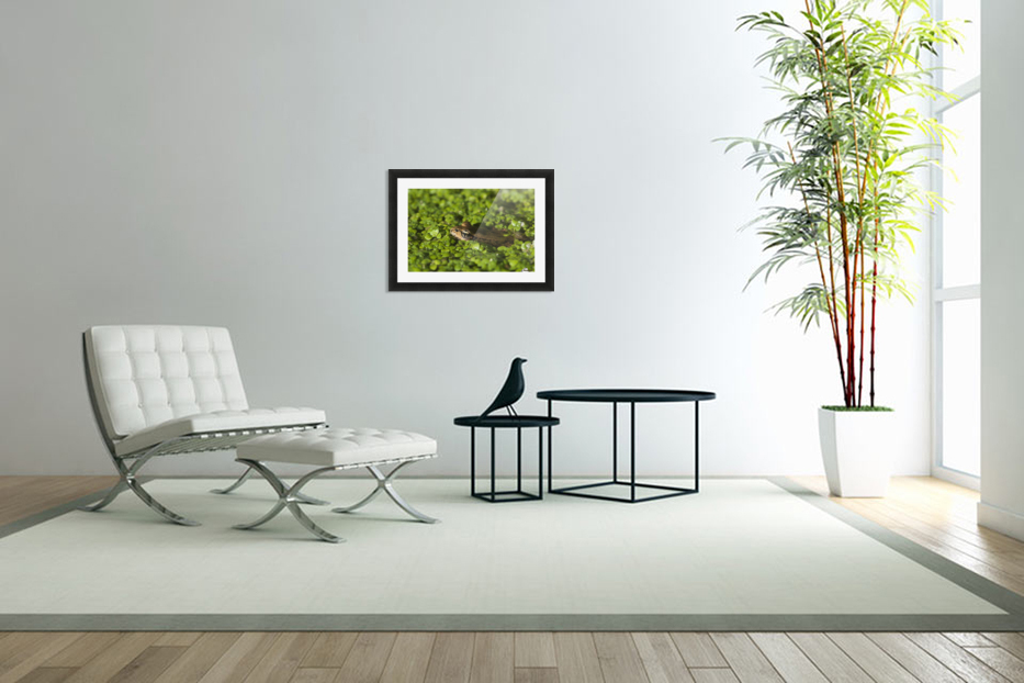 A Red-Legged Frog Rests In Small Plants; Astoria, Oregon, United States Of America in Custom Picture Frame