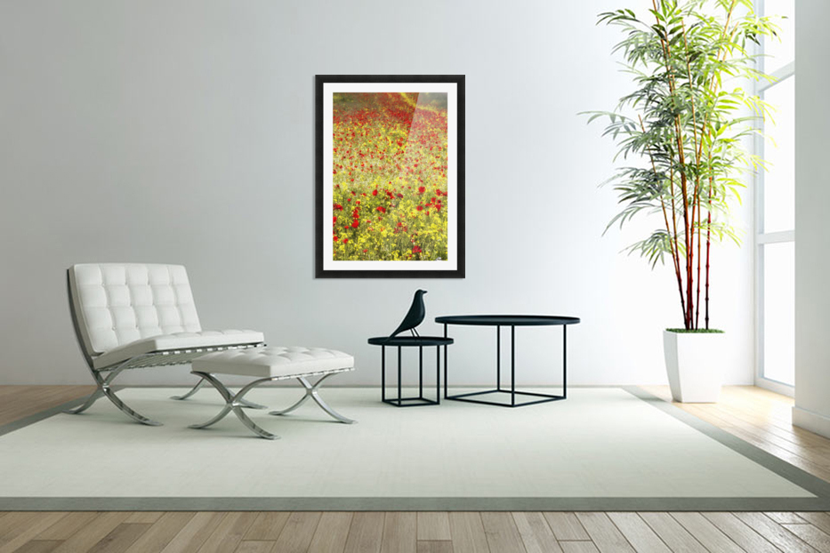 Abundance of red poppies in a field; Whitburn, Tyne and Wear, England in Custom Picture Frame