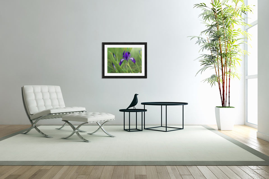 Oregon Iris (Iris tenax) blooms in the forest; Florence, Oregon, United States of America in Custom Picture Frame