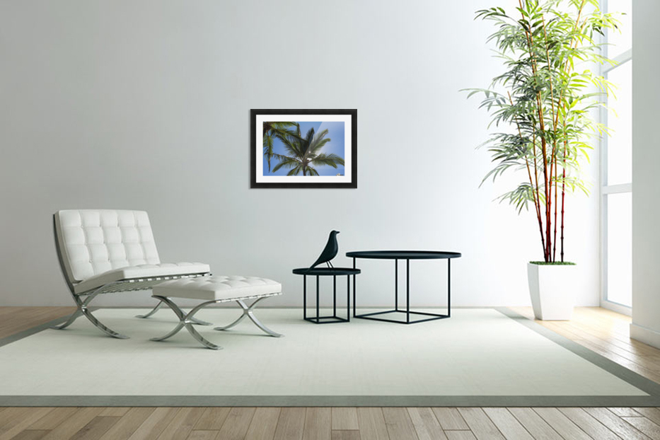 Coconut Palms backlit by the sunlight in a blue sky; Poipu, Kauai, Hawaii, United States of America in Custom Picture Frame