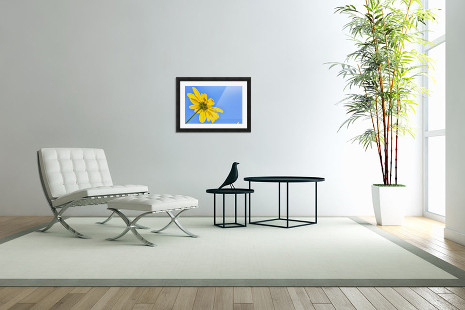 Yellow flower against a blue sky; Bolivia in Custom Picture Frame