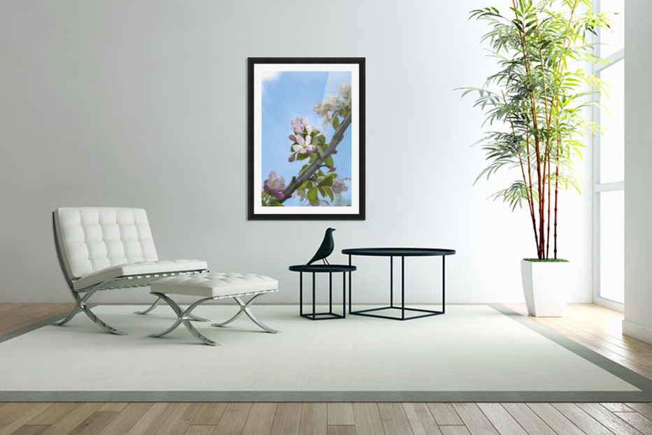 Pink and white crabapple flowers against a blue sky; Toronto, Ontario, Canada in Custom Picture Frame