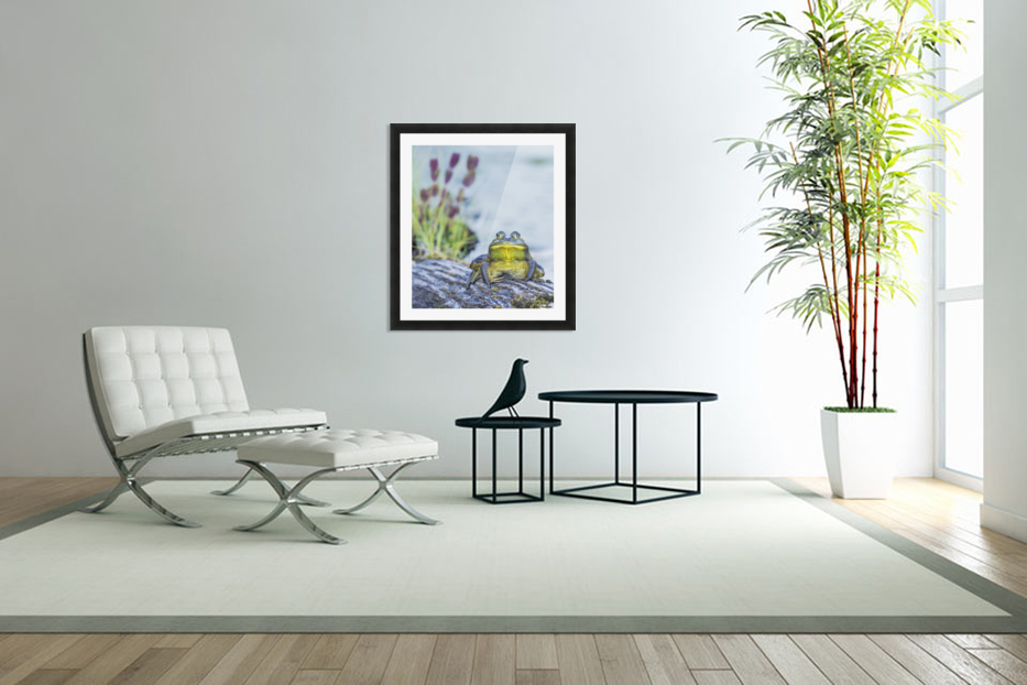 Bull frog (rana catesbeiana) resting on a log beside a lake; Ontario, Canada in Custom Picture Frame