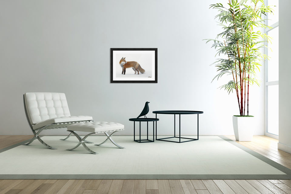 Fox in the snow; Montreal, Quebec, Canada in Custom Picture Frame