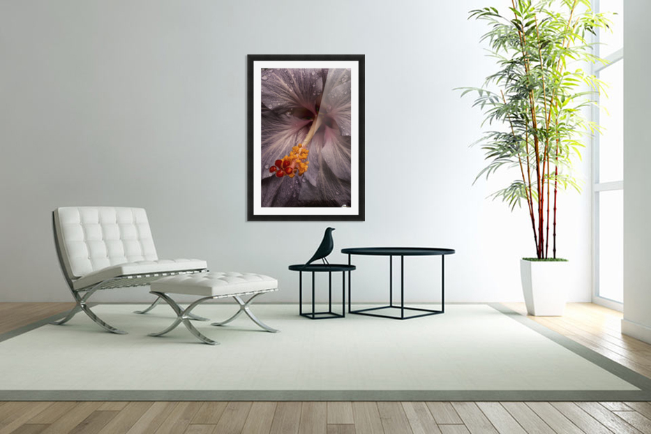 Close up of a Hibiscus flower with water droplets; Hawaii, United States of America in Custom Picture Frame