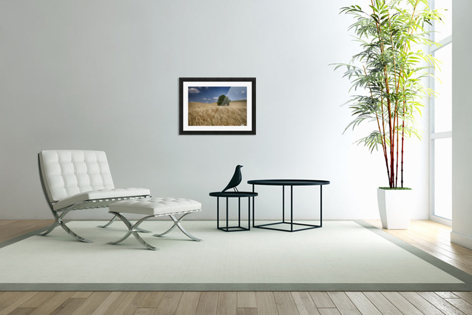 Lone tree in a wheat field; Palouse, Washington, United States of America in Custom Picture Frame