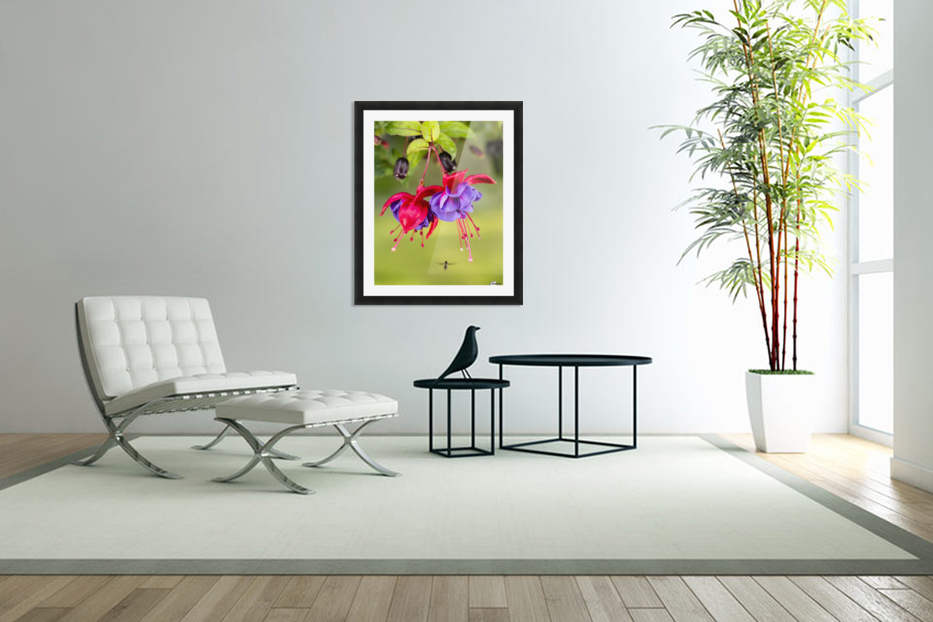 Close up of fuchsia and insect in garden; South-central Alaska; Eagle River, Alaska, United States of America in Custom Picture Frame