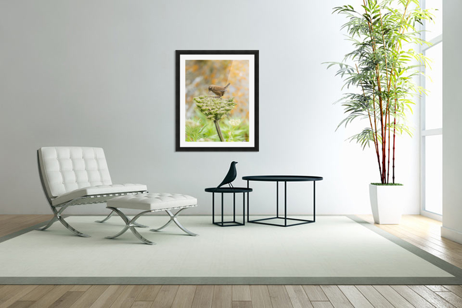 Pacific wren (Troglodytes pacificus) perched on wild celery on St. Paul Island in Southwest Alaska; St. Paul Island, Pribilof Islands, Alaska, United States of America in Custom Picture Frame