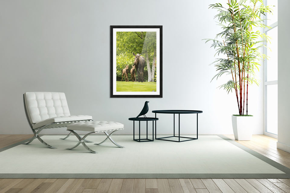 A cow moose (alces alces) with her calves on green grass with lush green foliage; Anchorage, Alaska, United States of America in Custom Picture Frame