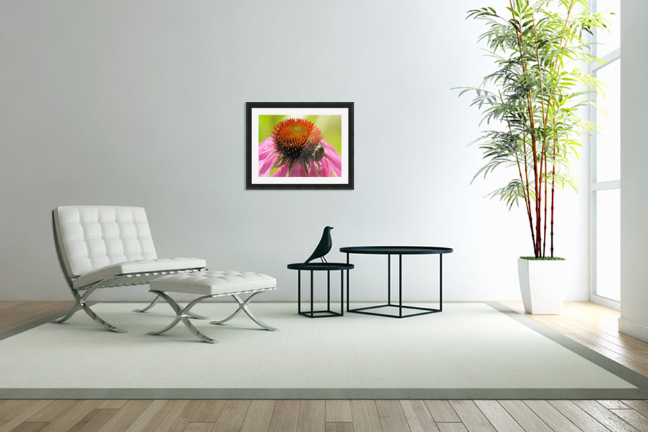 Echinacea and the Bee in Lincoln Park VP6 in Custom Picture Frame