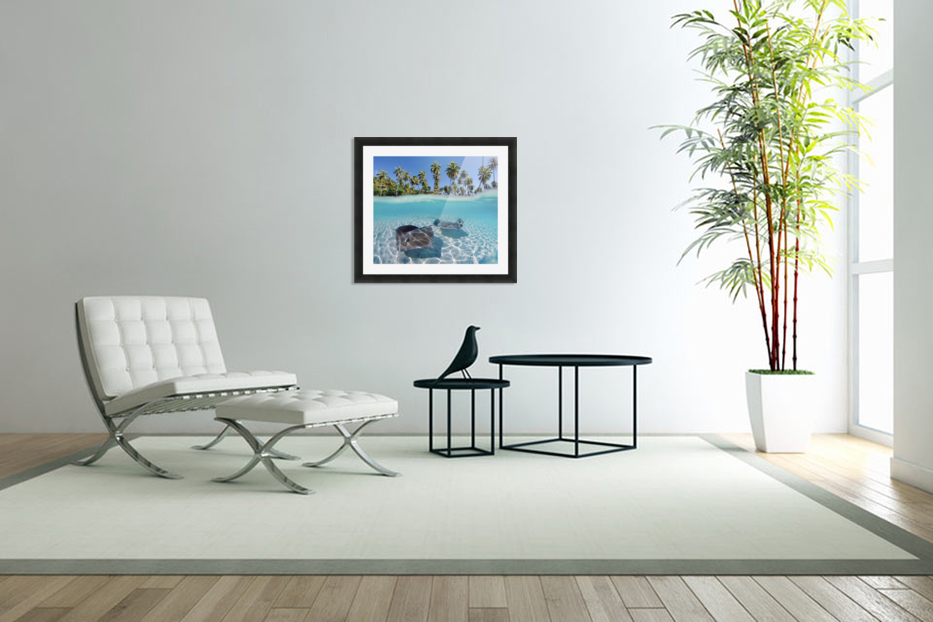 French Polynesia, Tahiti, Moorea, Two Stingray In Beautiful Turquoise Water. in Custom Picture Frame