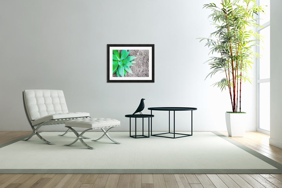 green leaf plant with sand background in Custom Picture Frame