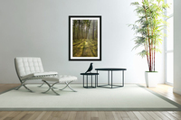 Mossy Forest Morning  Acrylic Print