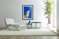 Howling Coyote  Acrylic Print