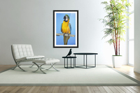 Blue-And-Gold Macaw  Acrylic Print