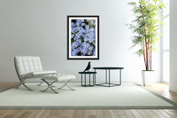 Victoria, British Columbia, Canada; Blooming Blue Flowers  Acrylic Print