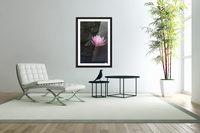A water lily blooms in a pond; Astoria, Oregon, United States of America  Acrylic Print