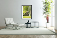 A cow moose (alces alces) with her calves on green grass with lush green foliage; Anchorage, Alaska, United States of America  Acrylic Print