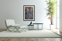 Face on view of great blue heron  Acrylic Print