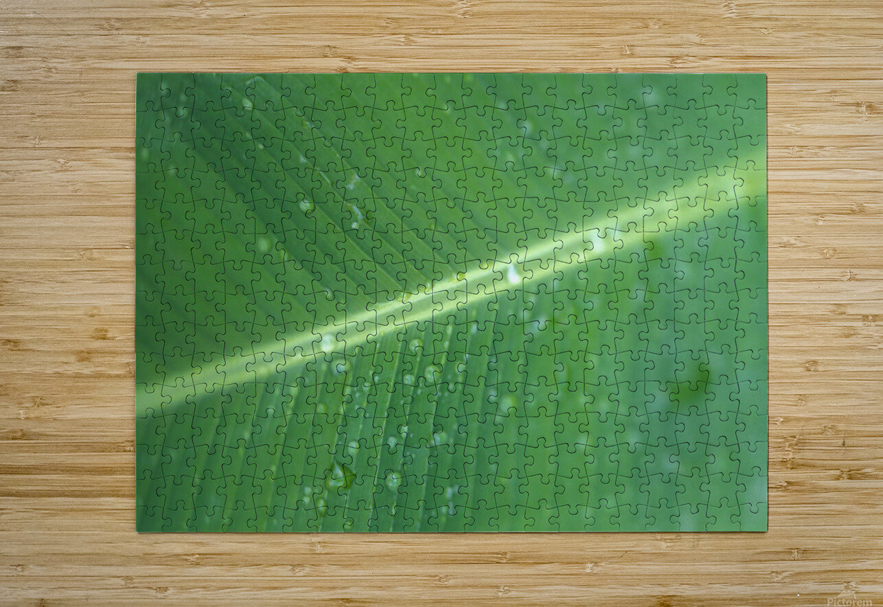 Close-Up Detail Green Banana Leaf With Droplets Of Water, Dew  HD Metal print with Floating Frame on Back
