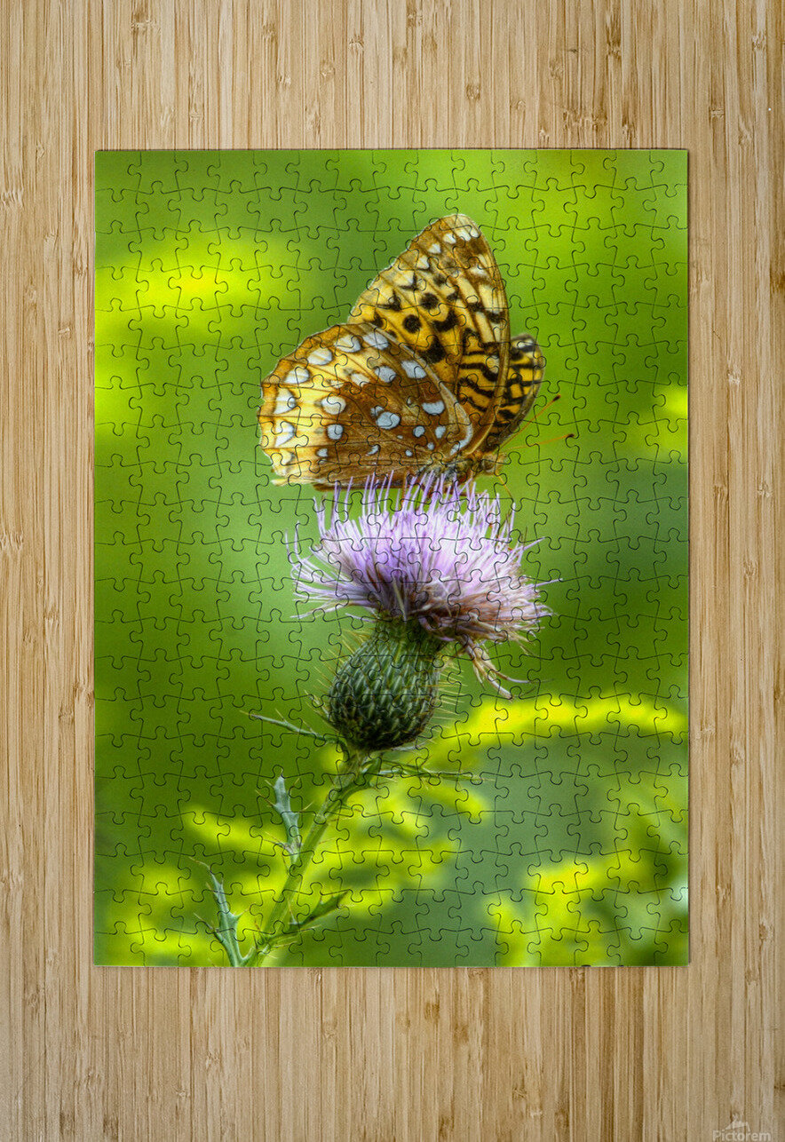 Thistle Nectar  HD Metal print with Floating Frame on Back