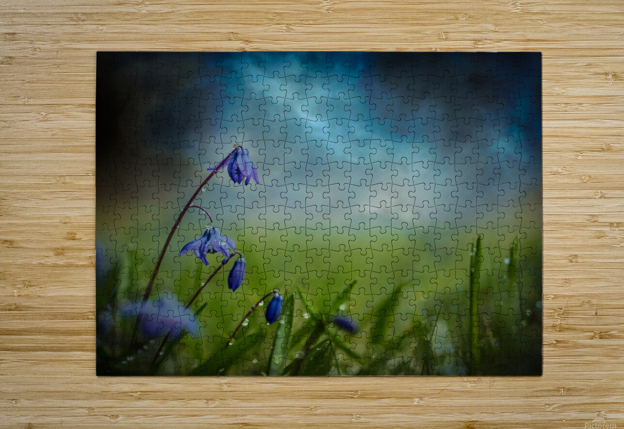 After the spring rain  HD Metal print with Floating Frame on Back