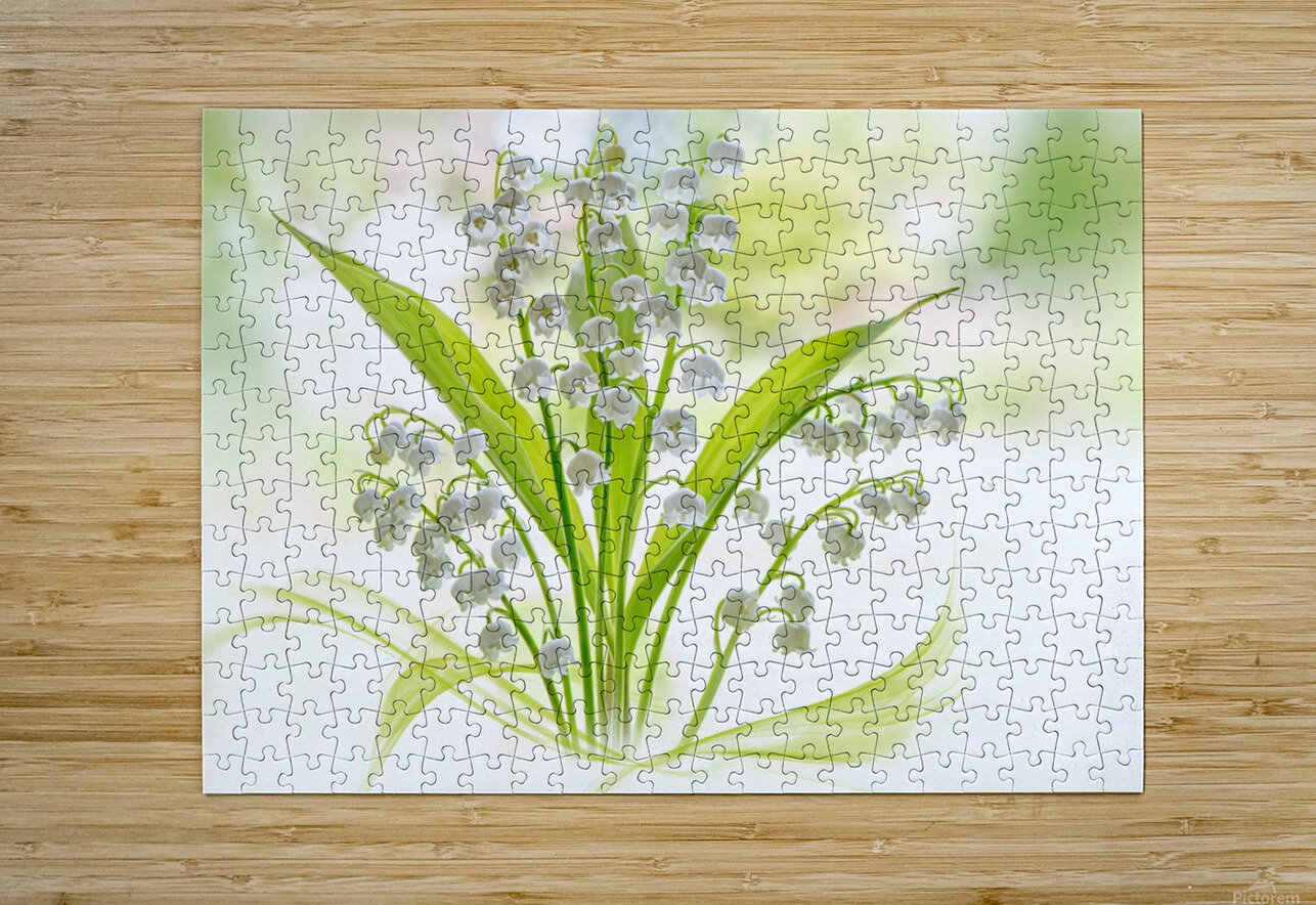 Lily of the valley  HD Metal print with Floating Frame on Back