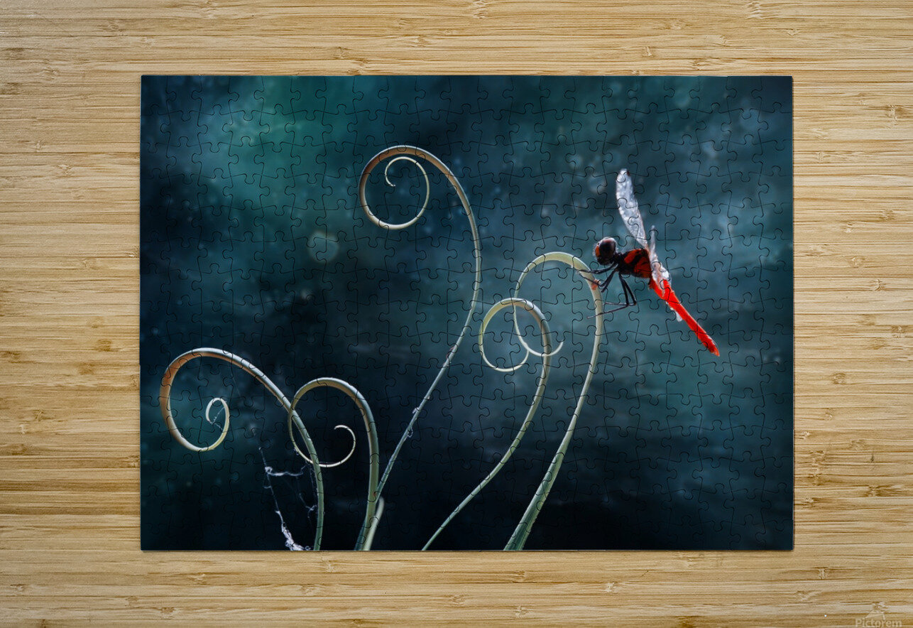 Red Dragonfly  HD Metal print with Floating Frame on Back