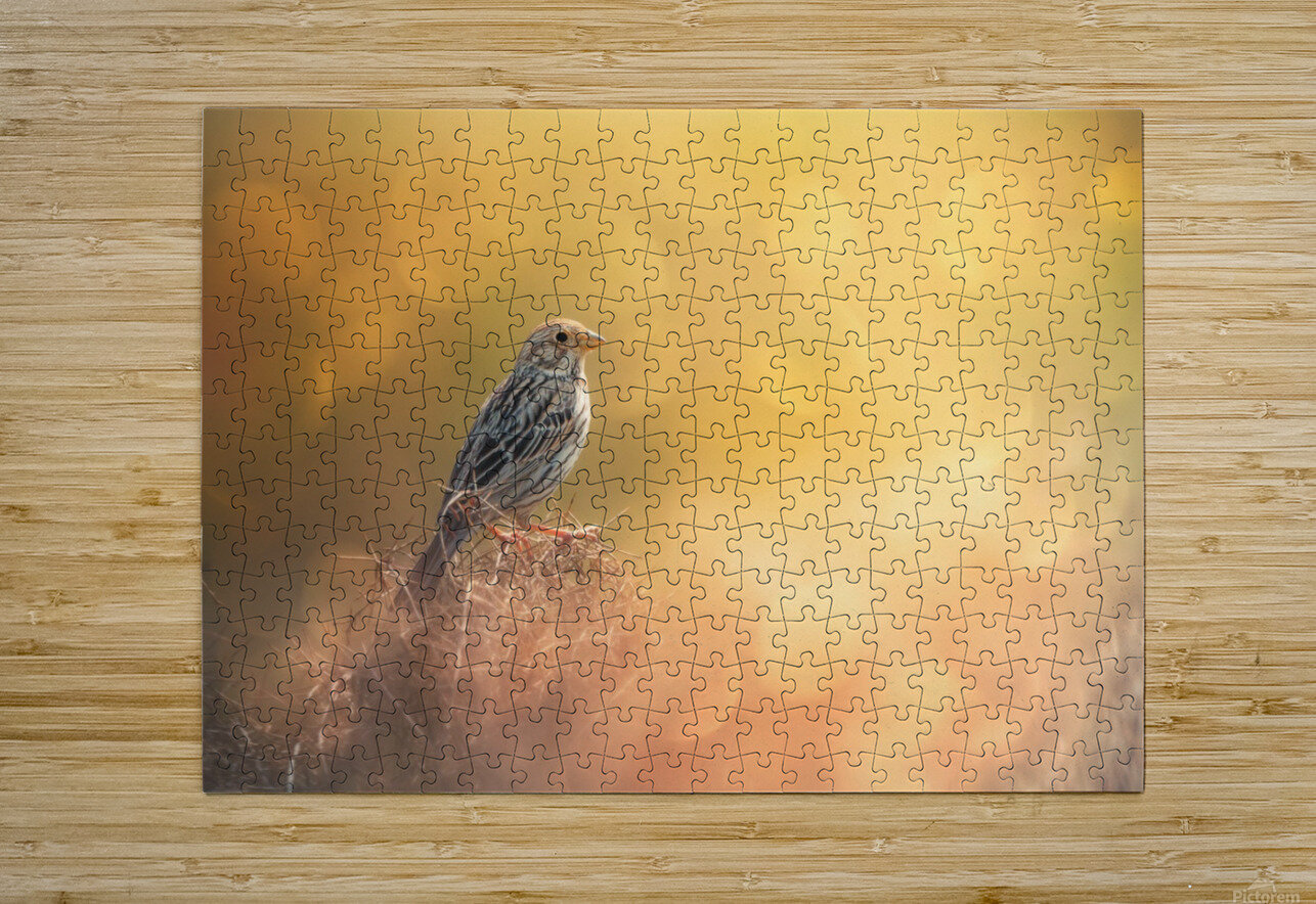 Lost in Bokeh  HD Metal print with Floating Frame on Back