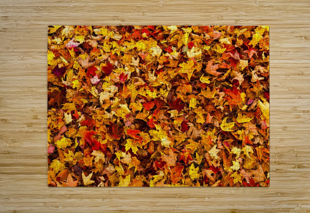 Autumn leaves on the ground; Iron Hill, Quebec, Canada  HD Metal print with Floating Frame on Back