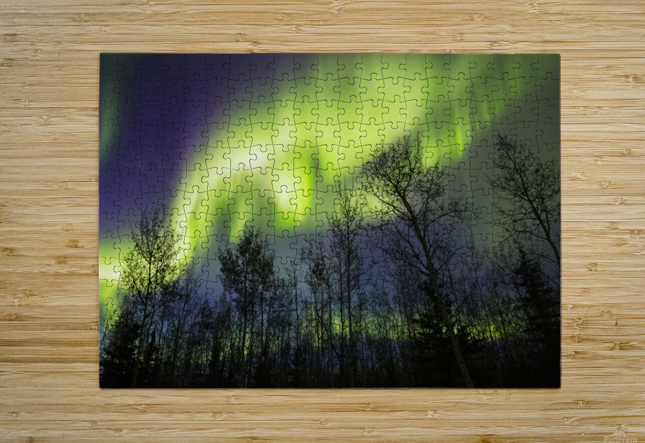 Aurora borealis over silhouetted trees; Alaska, United States of America  HD Metal print with Floating Frame on Back