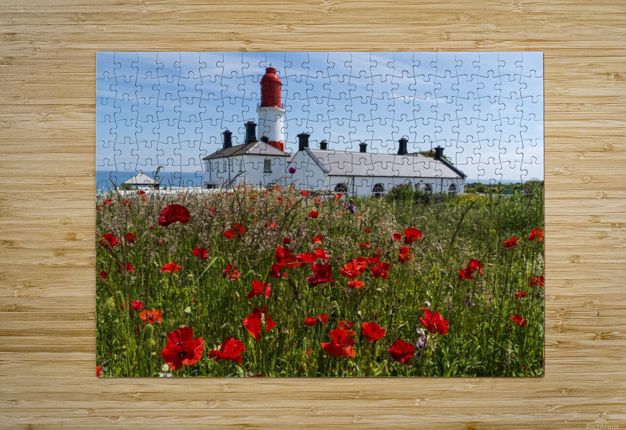 Souter Lighthouse with a field of red poppies in the foreground; South Shields, Tyne and Wear, England  HD Metal print with Floating Frame on Back