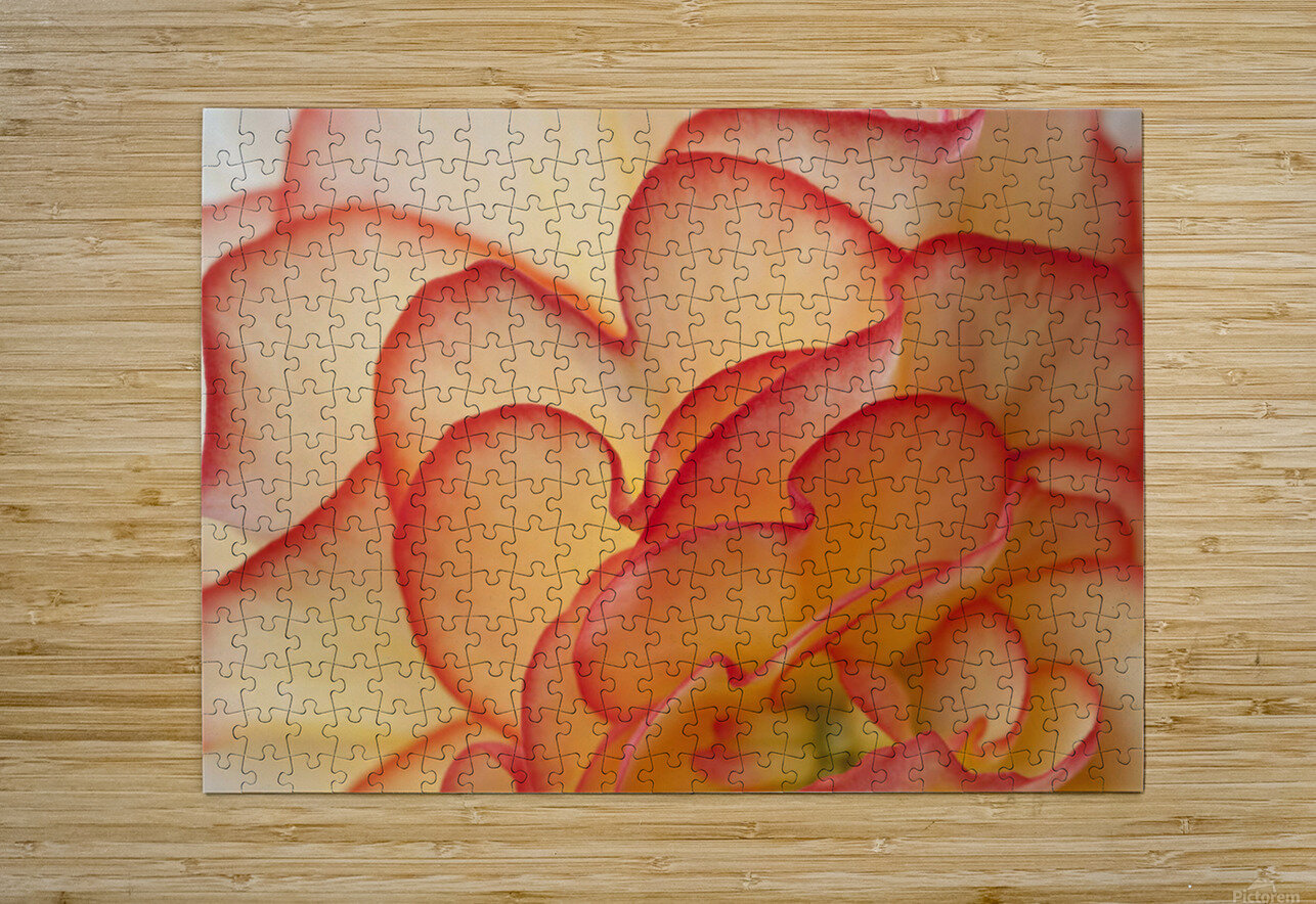 Macro View Of Begonia Petals, Girdwood, Southcentral Alaska, Summer  HD Metal print with Floating Frame on Back