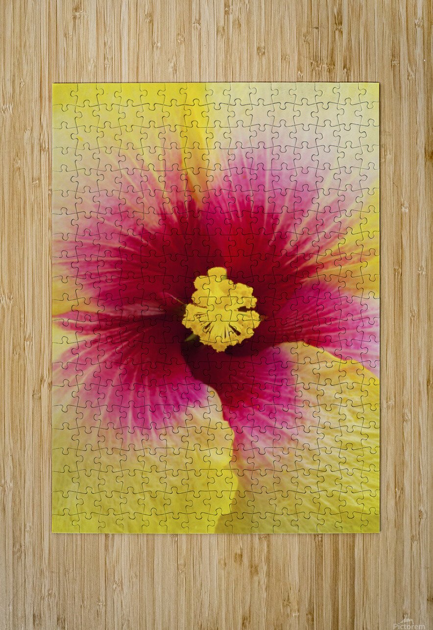 Close-up macro shot of a beautiful red and yellow Hibiscus flower; Honolulu, Oahu, Hawaii, United States of America  HD Metal print with Floating Frame on Back