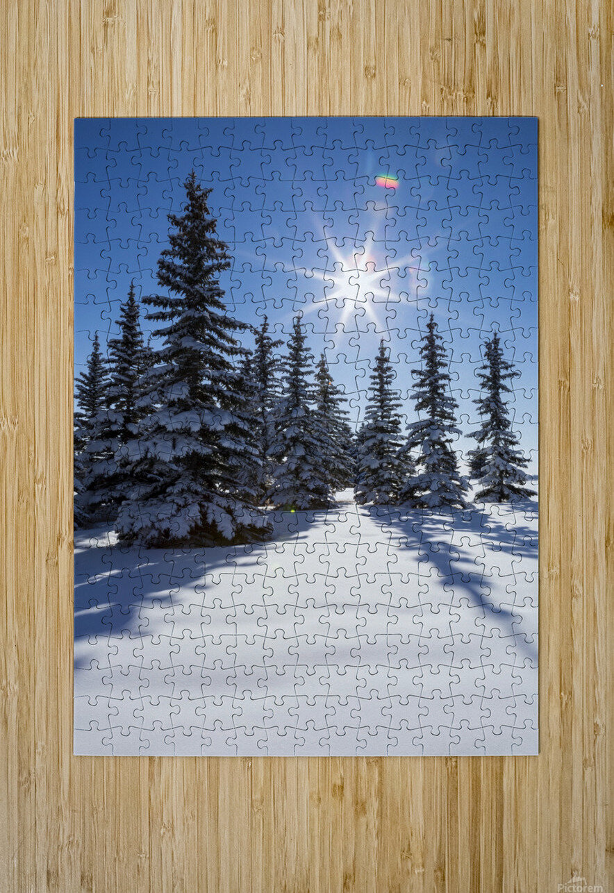 Snow covered evergreen trees on a snow covered hillside with blue sky and sun burst; Calgary, Alberta, Canada  HD Metal print with Floating Frame on Back