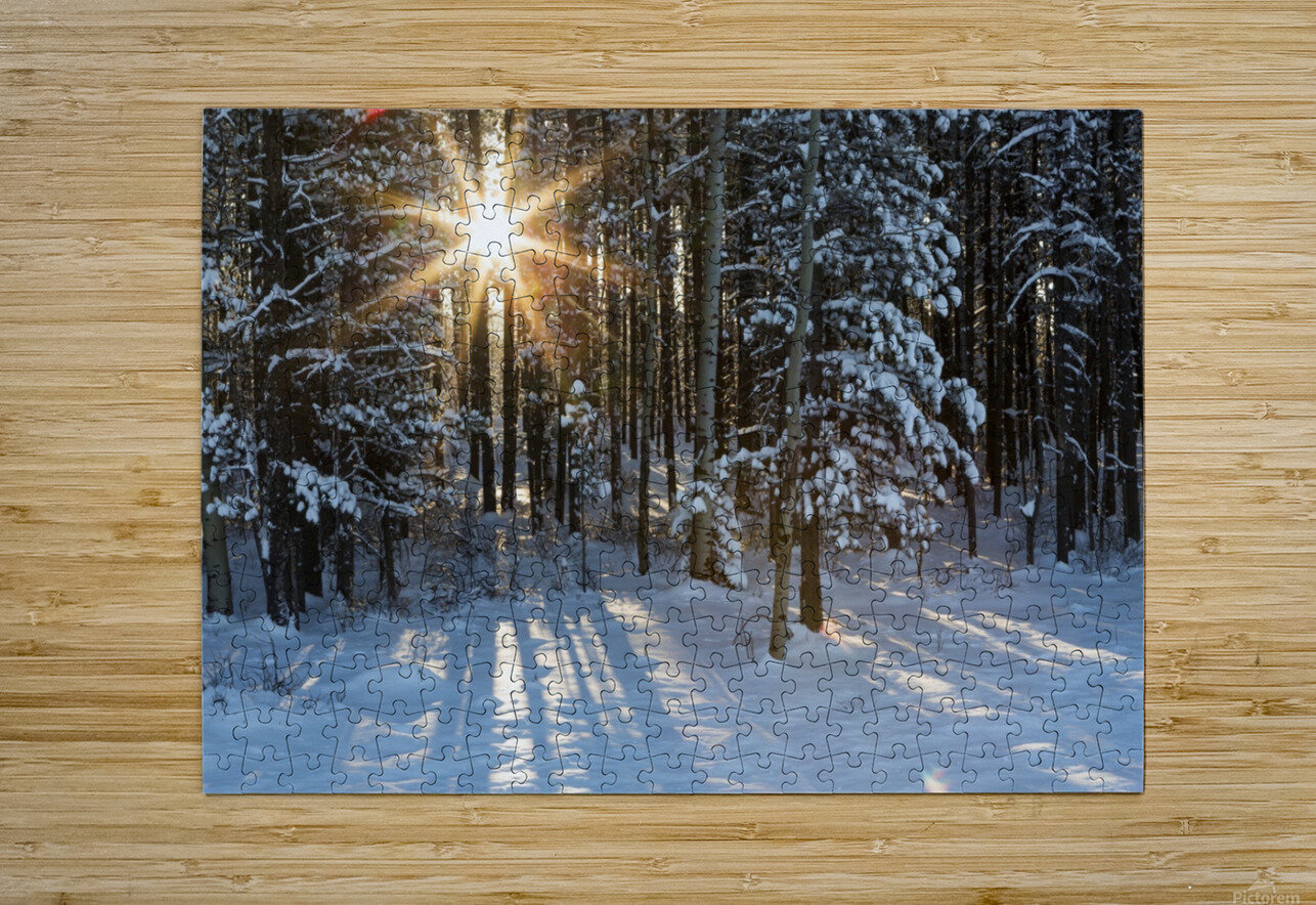 Sunburst coming through a snow covered forest; Kananaskis Country, Alberta, Canada  HD Metal print with Floating Frame on Back