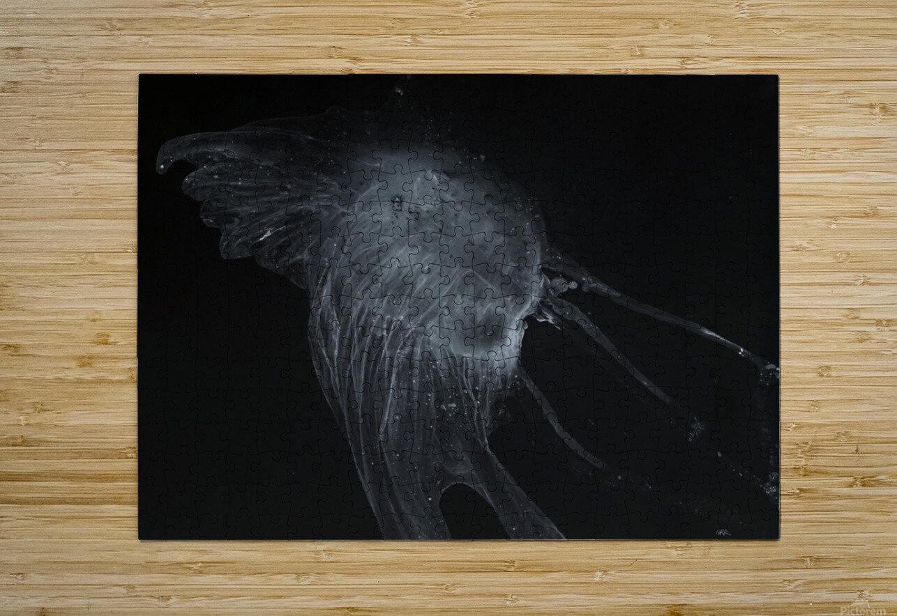 Glowing grey jellyfish in the dark water  HD Metal print with Floating Frame on Back