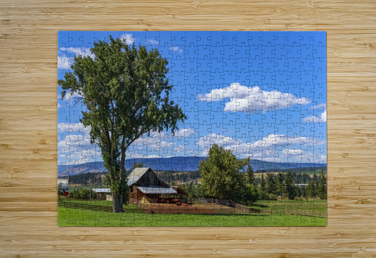 Beef cows rest in the shade of the barn roof under a blue sky with fluffy white clouds in the summer in the North Okanogan; British Columbia, Canada  HD Metal print with Floating Frame on Back