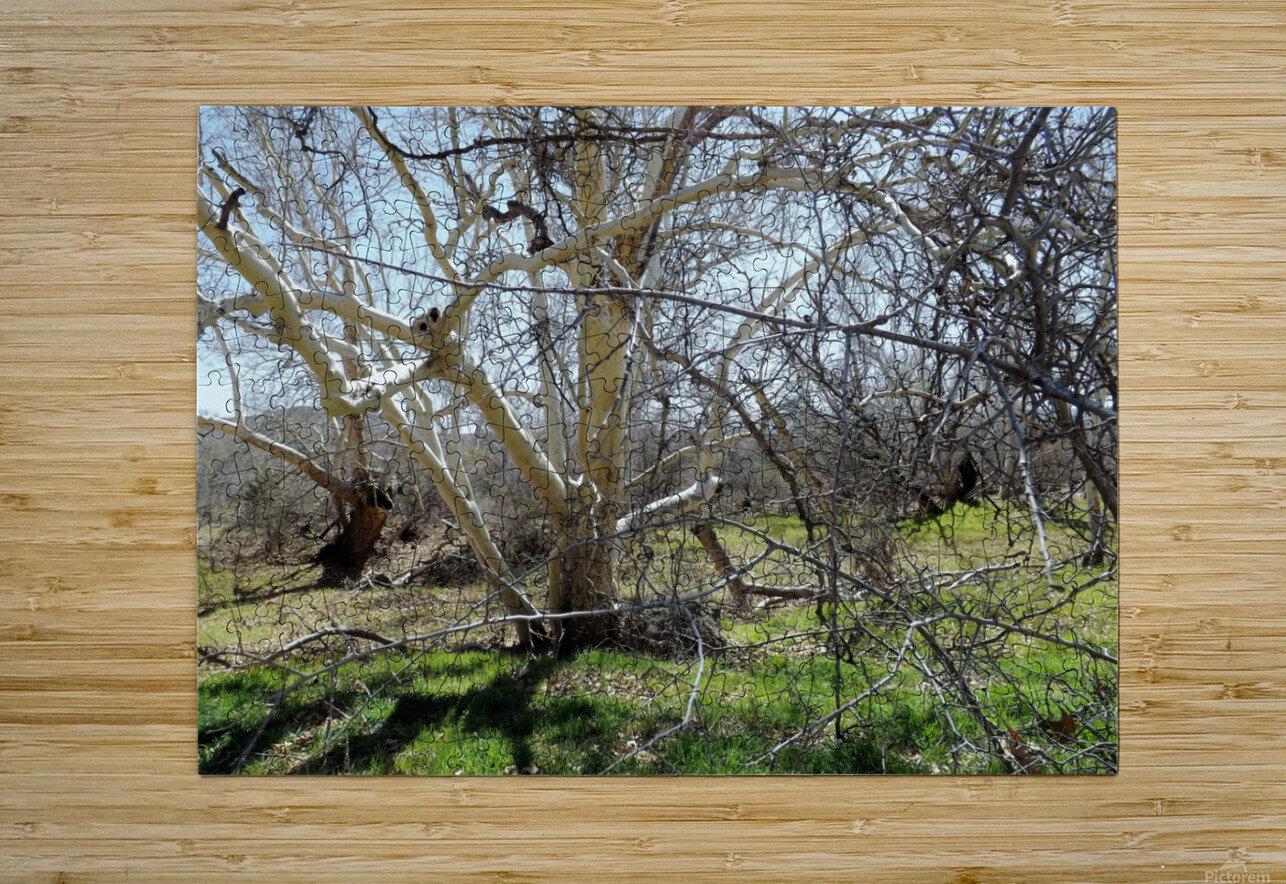 another narley old tree  Impression métal HD avec cadre flottant sur le dos