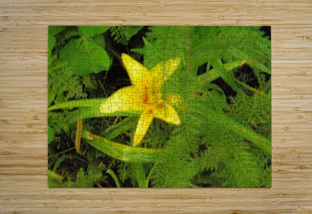 Yellow Flower  HD Metal print with Floating Frame on Back