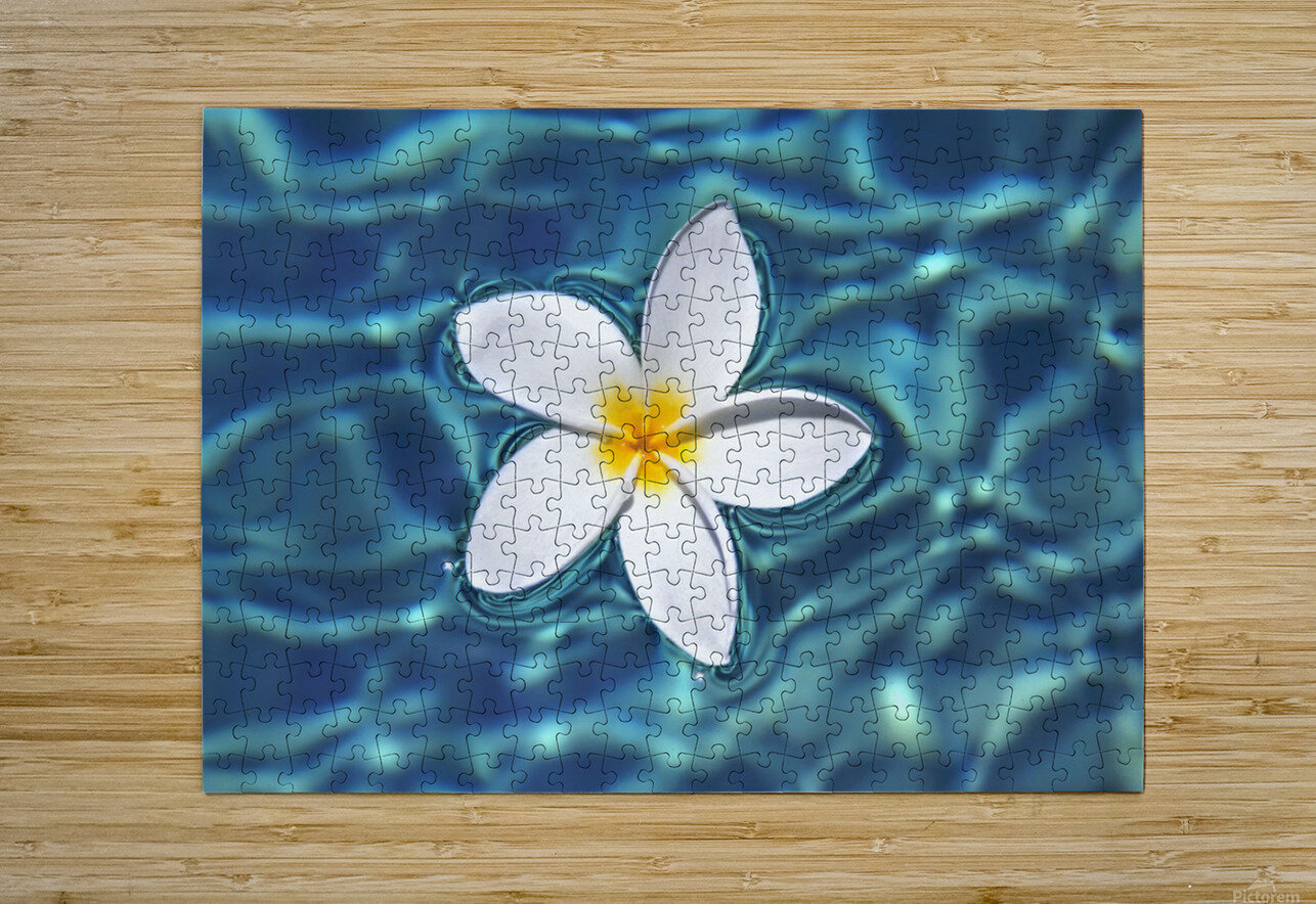 Plumeria flower floating in clear blue water.  HD Metal print with Floating Frame on Back