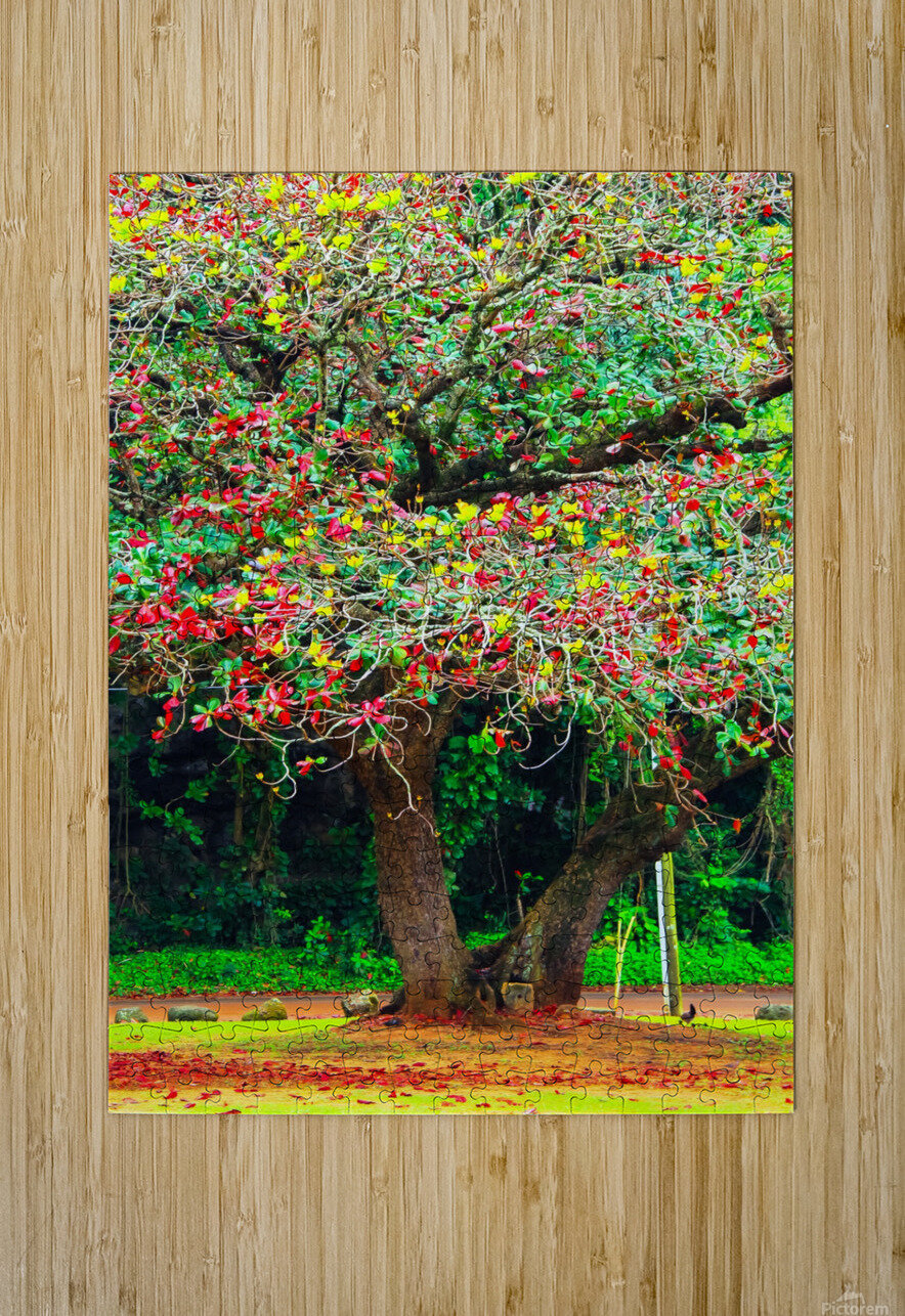 big tree with green yellow and red leaves  HD Metal print with Floating Frame on Back