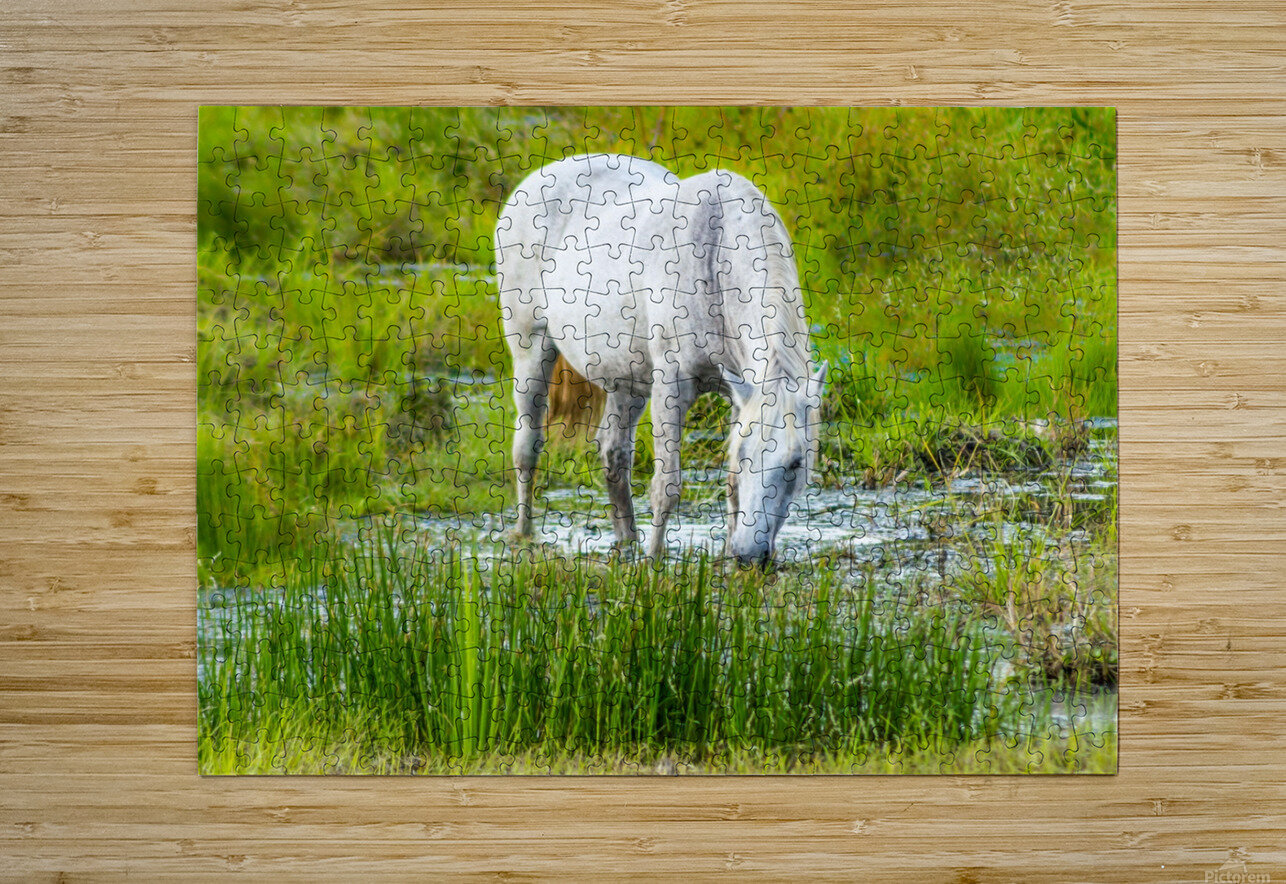 Wild Wetland Stallion  HD Metal print with Floating Frame on Back