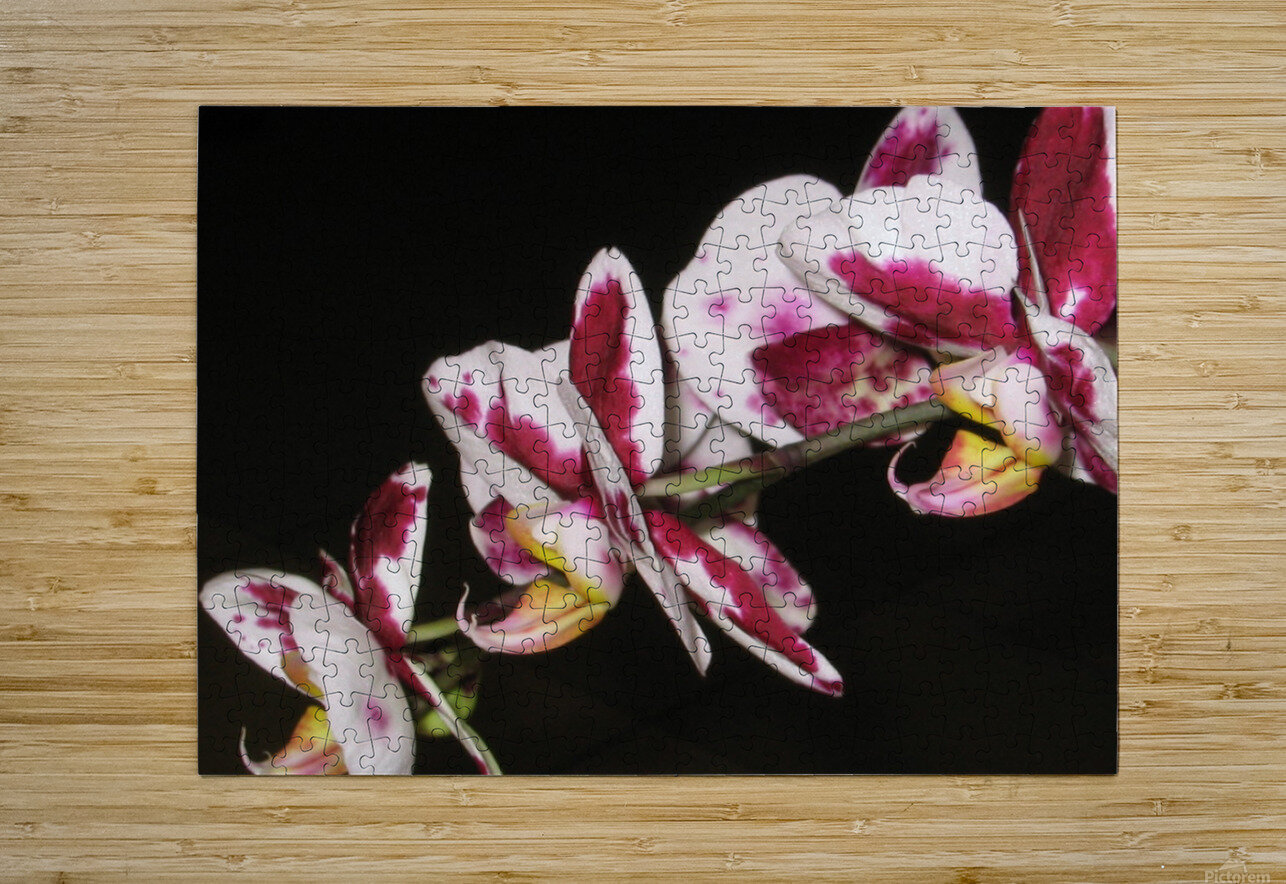 Sexy Orchid  HD Metal print with Floating Frame on Back