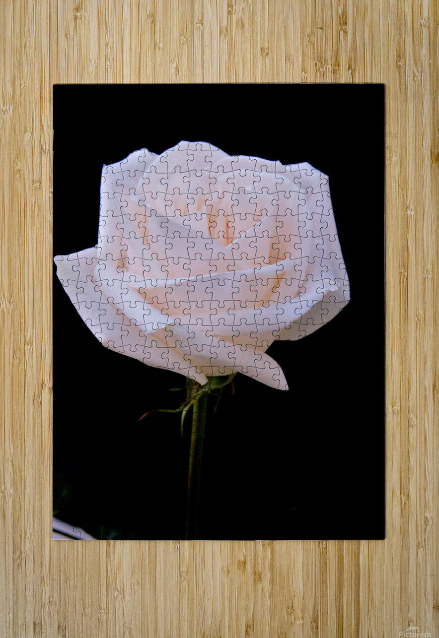 Rose for bride  HD Metal print with Floating Frame on Back