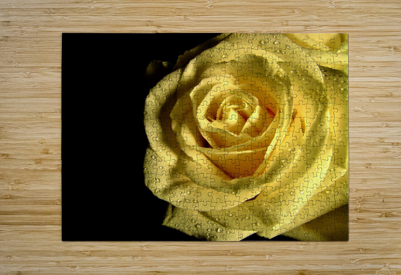 Yellow dew  HD Metal print with Floating Frame on Back